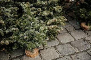 Nordsjællands Hyggeligste Julemarked