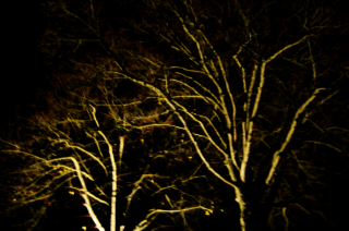 Allehelgensaften - Madfortælling på Esrum kloster